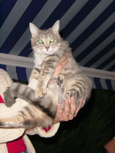 Blog de cathycolor : Artiste mal-voyante, Chatssssssssss, Les chats, devinette.