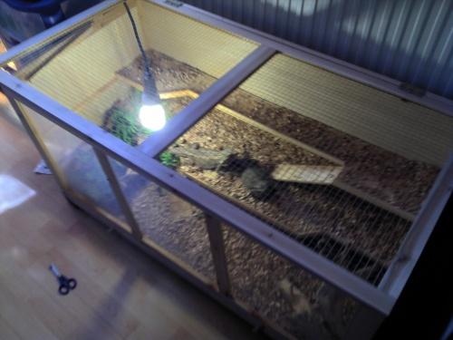 mon terrarium 130x45x60 dragon barbu et dragon d 39 eau. Black Bedroom Furniture Sets. Home Design Ideas