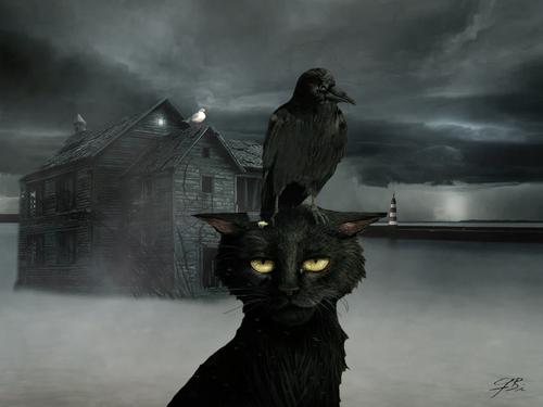 La malédiction du chat noir