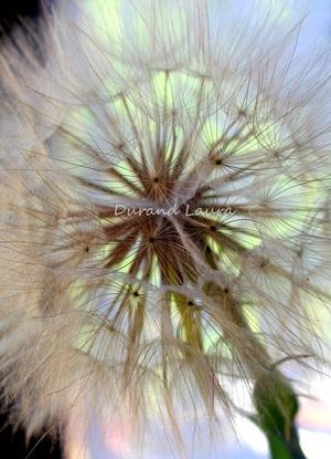 Pollen de fleur - Boule de plus de 10 cm