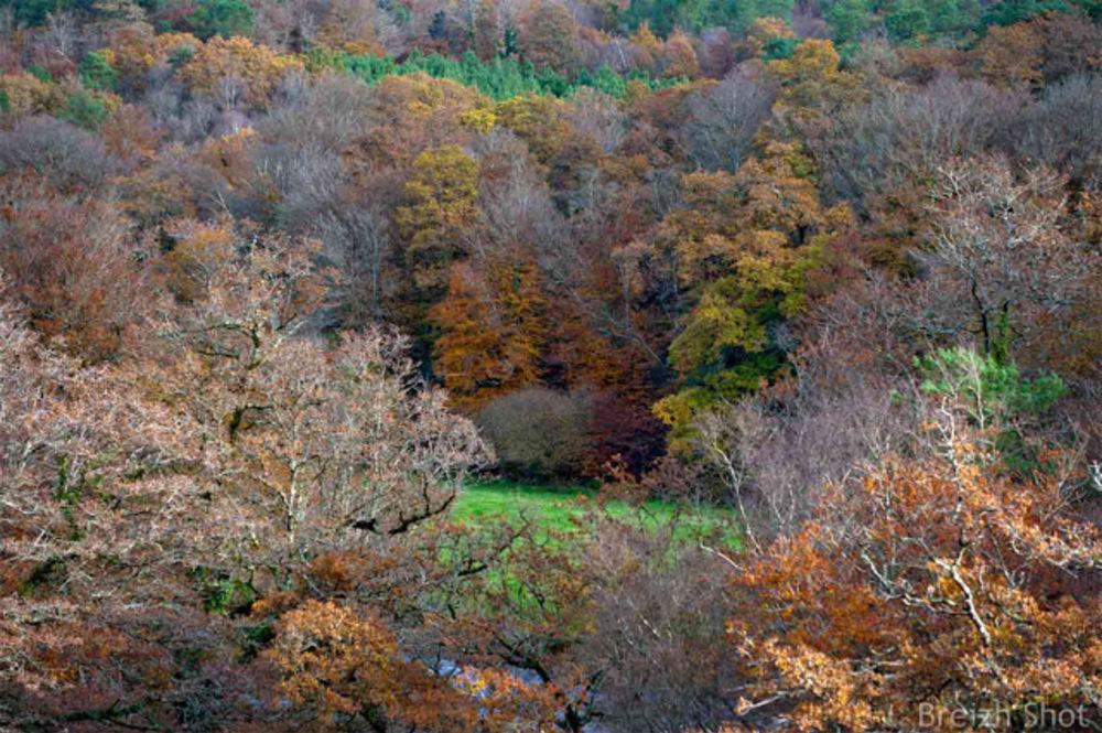 La rivière Ellé en automne sous les premices de l'hiver