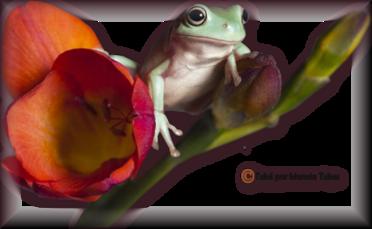 Tube grenouilles / Crapauds 2950