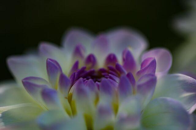 Le jardin comme exutoire (18)