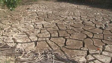 Le coucou du vendredi, haïku, senryû, la sécheresse...