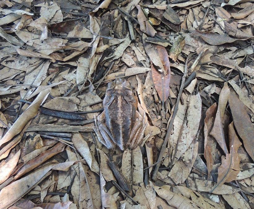 23-camouflages-spectaculaires-danimaux-qui-ne-manquent-pas-de-talent5