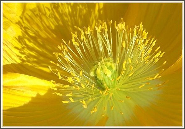 Soleil végétal