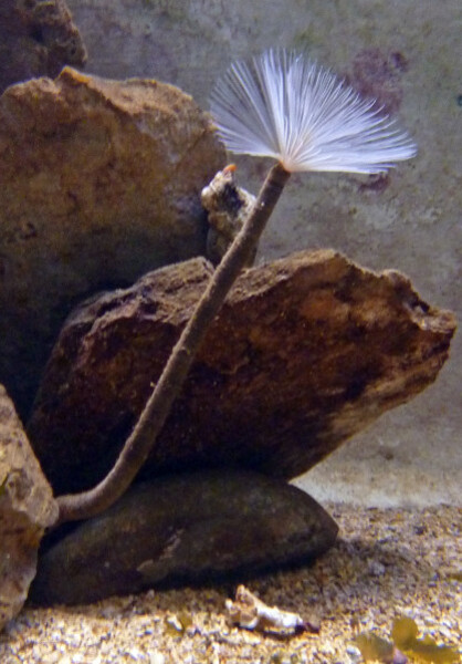 Banyuls - Aquarium Spyrographe