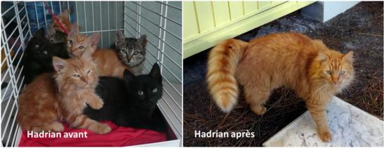 Hadrian blog