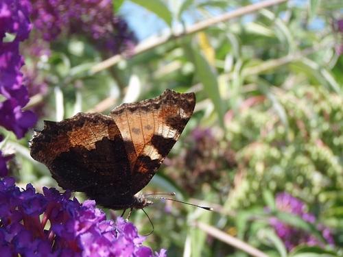 Des papillons, des fleurs... et encore des papillons