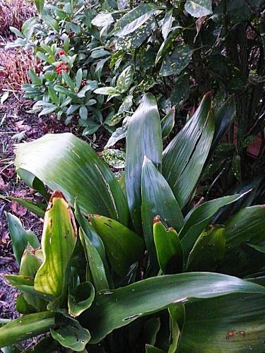 Jardin--17-01-11-002.jpg