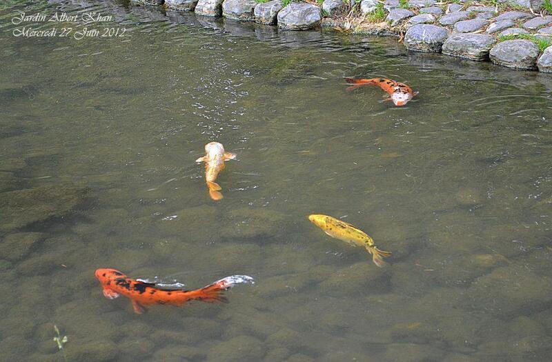 Jardins Albert Kahn : Le Jardin Japonais
