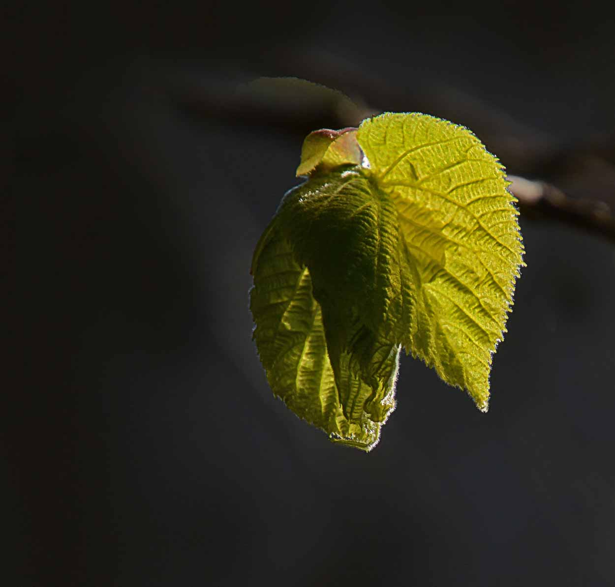 Oiseaux feuilles...