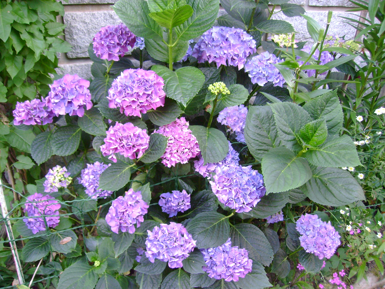 Jardin De Bulbes Fleurs L 39 Atelier Des Fleurs - Au Fleur De Ton ...