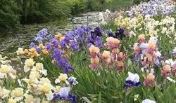 Décor florale