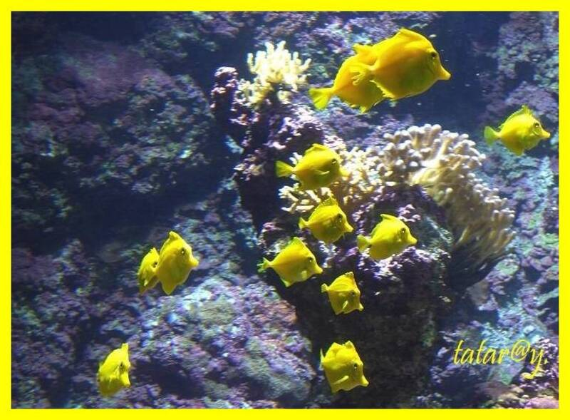 Aquarium . La rochelle.