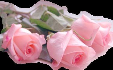 ♥ Parfum de rose  ♥