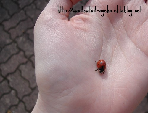 Coccinelle by Ageha