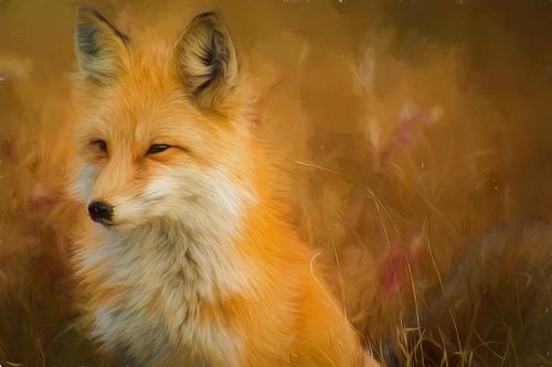 Pour mieux connaître et protéger le renard