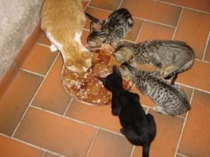GARY-chatons-repas.jpg