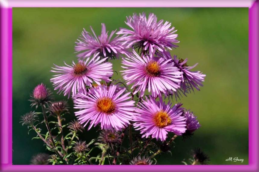 fleur-7953.jpg