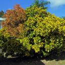 Crotons mêlés ...- Hôpital Clarac - Photo : Edgar