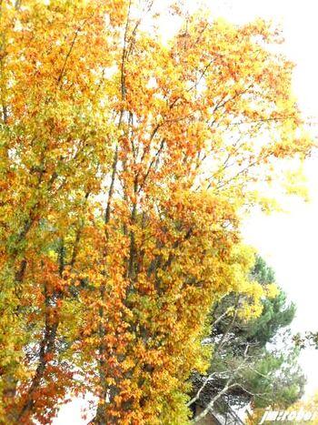 Une belle balade aux couleurs de l'automne