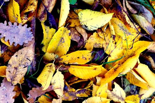 Des feuilles au sol !