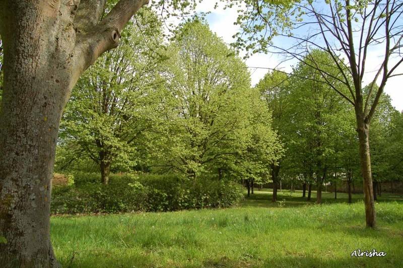 arbre en été