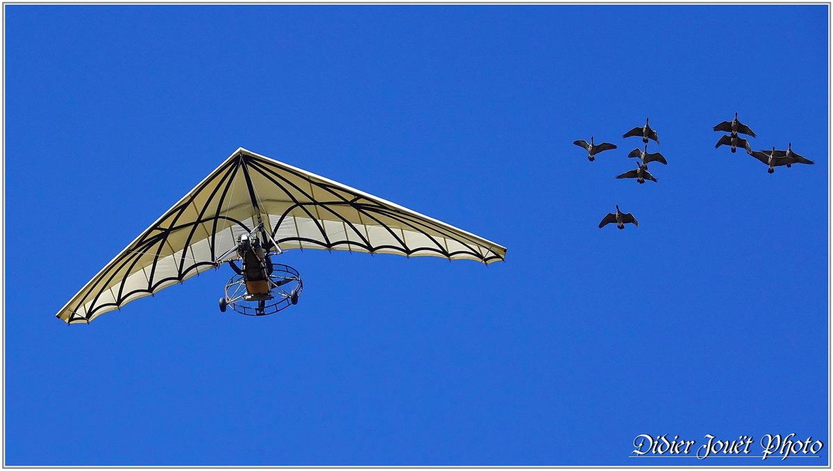 Puy du Fou (3) - Le Bal des Oiseaux Fantômes