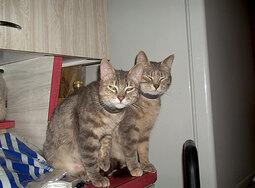 Hermione et sa fille Patoche