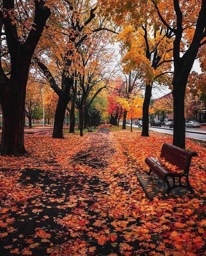 Bon dimanche d'automne