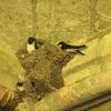 oiseaux-4.jpg