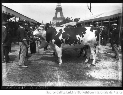 Des vaches suite