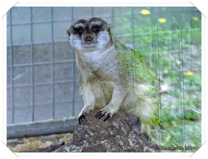 Zoo du Bassin d'Arcachon à La Teste de Buch - 6/20