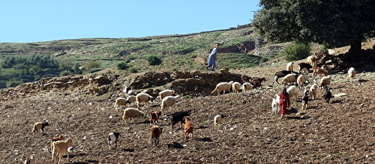 Maroc 8 / Tranches de vie dans la Haut-Atlas (2)