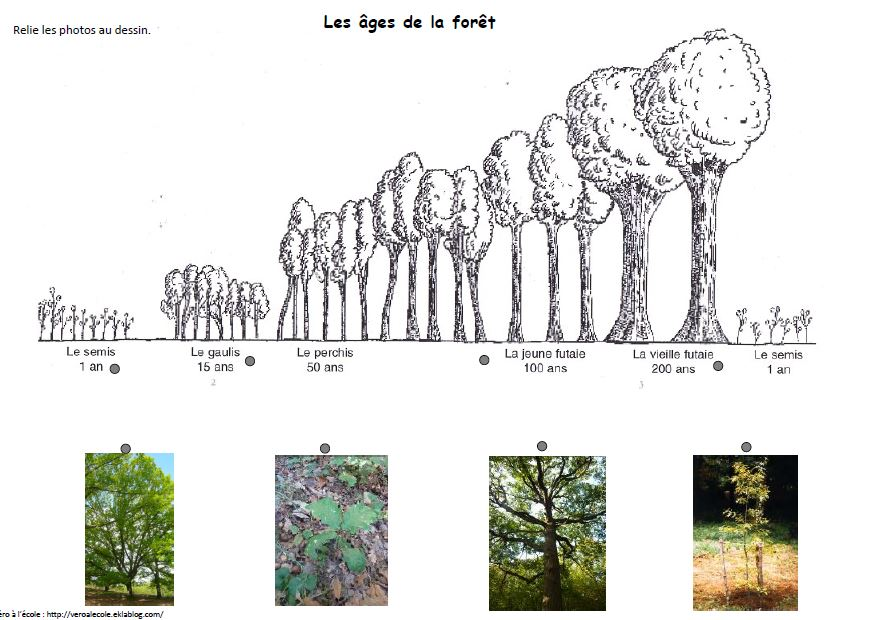 forêt cycle 2