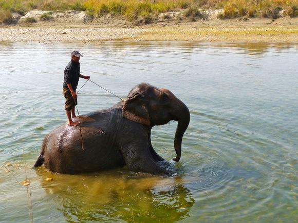 la toilette des éléphants