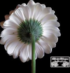Flower's 5.