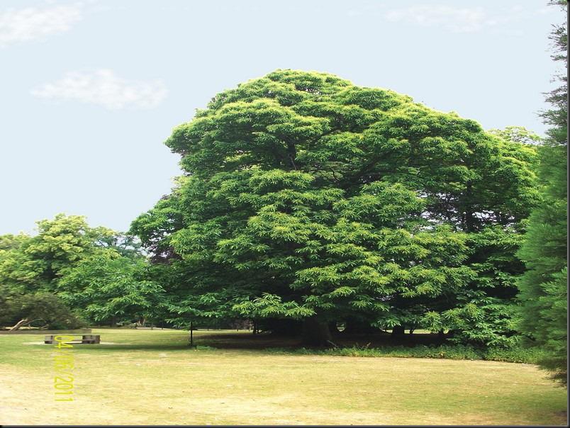 le parc arboretum de jumet052