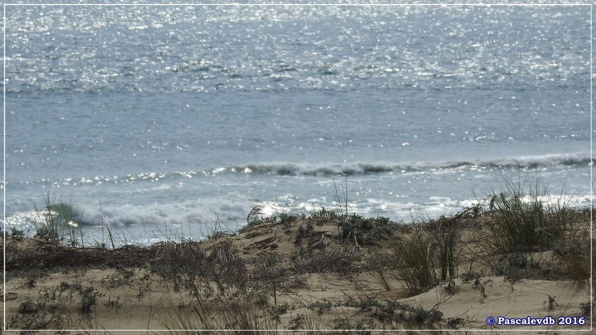 Dans les dunes à la pointe du Cap Ferret - Mars 2016 - 1/3