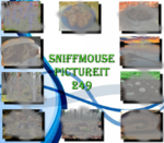 Picture It 249 - Sniffmouse