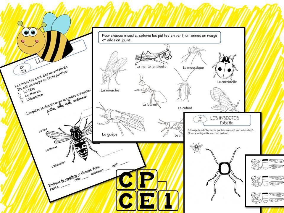 Les insectes la classe de corinne - Reconnaitre les insectes xylophages ...