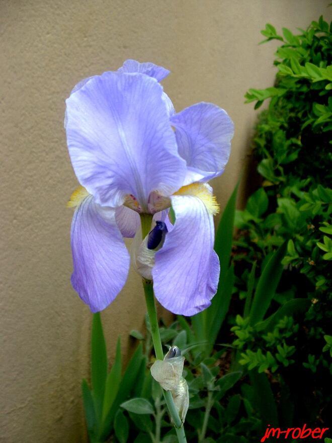 Mon jardin en d'avril: Sa floraison continue