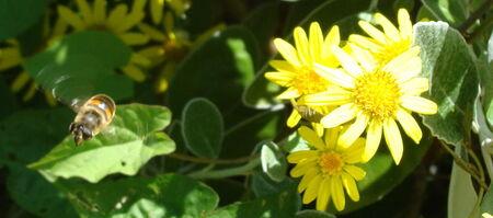 abeilles_09