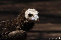 Parc des Oiseaux de Villars les Dombes - 2015