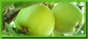 pommes-copie-1.jpg