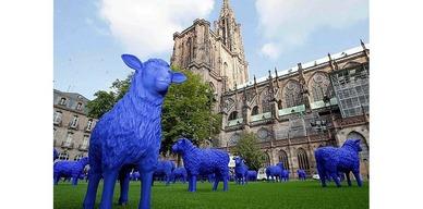 Les moutons bleus !!!