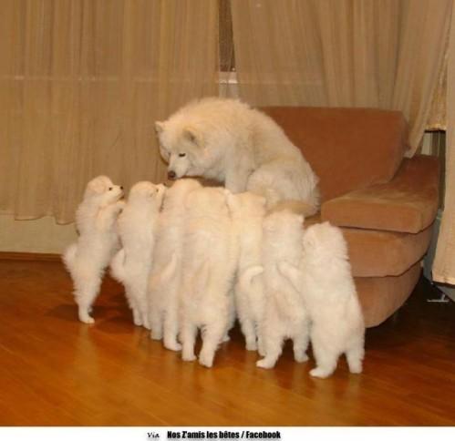 chien et petits