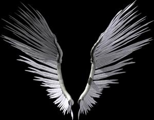 grandes ailes noires ou grises
