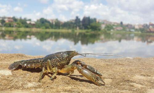 Nouvelles espèces découvertes en 2018